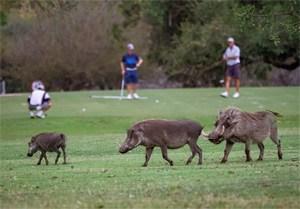 Skukuza Golf Course – South Africa